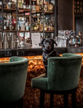 COCKTAILS AND DOGTAILS
