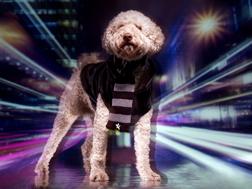 <b>Doggy Style...</b>