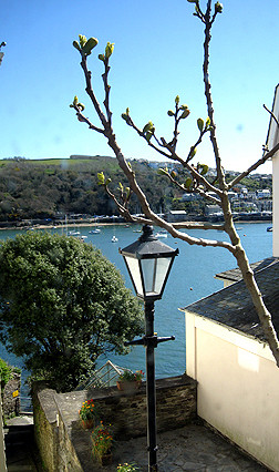 The south bank of the River Fowey