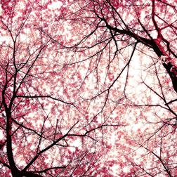 <b>Very Cherry...</b>