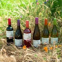 Cono Sur, the green winery