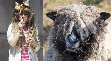 <b>Cher's Looking Sheep...</b>