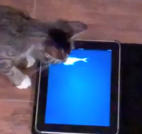 <b>Apps For Cats...</b>