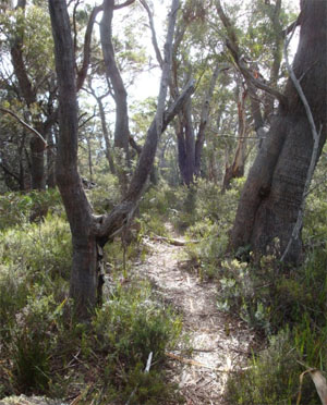One of the walk trails