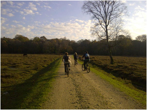 A bike tour around the New Forest