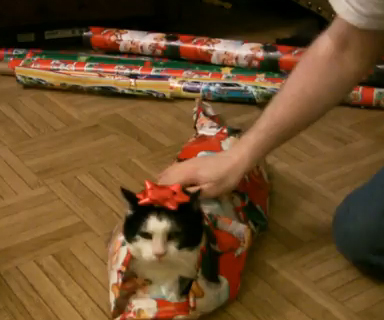 Wrap Your Cat For Christmas