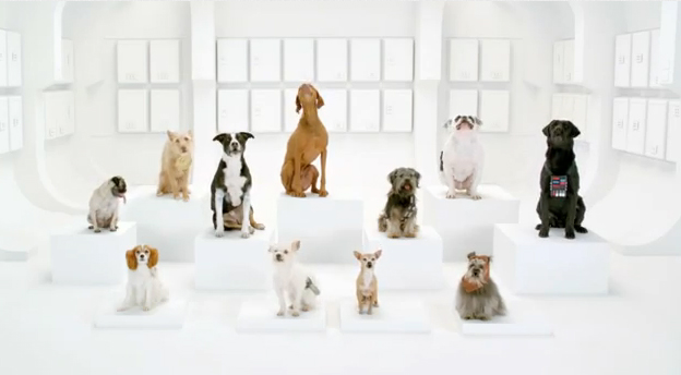 The canine choir