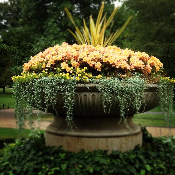 Beautiful Flowers in Regent's Park