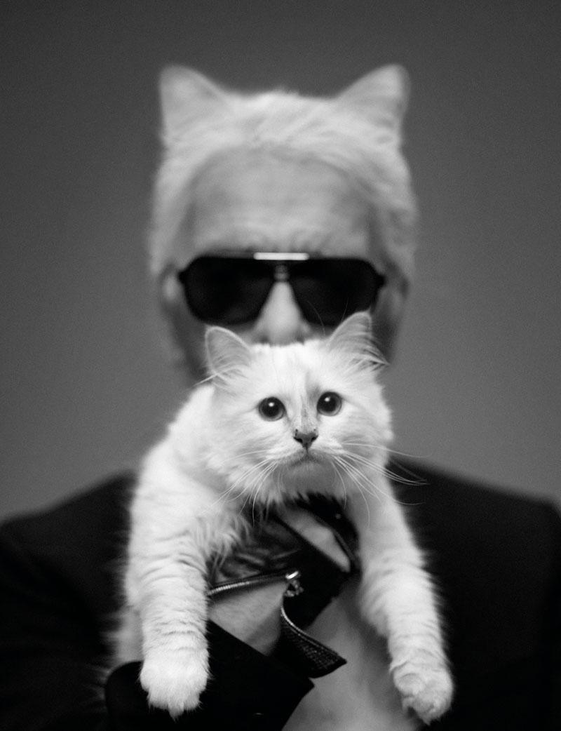 <b>Famous Celebrity Cat...</b>
