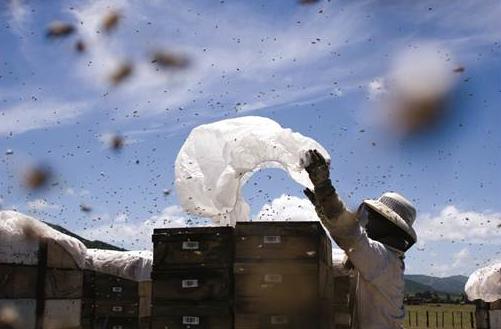 Steens Hive Tracker