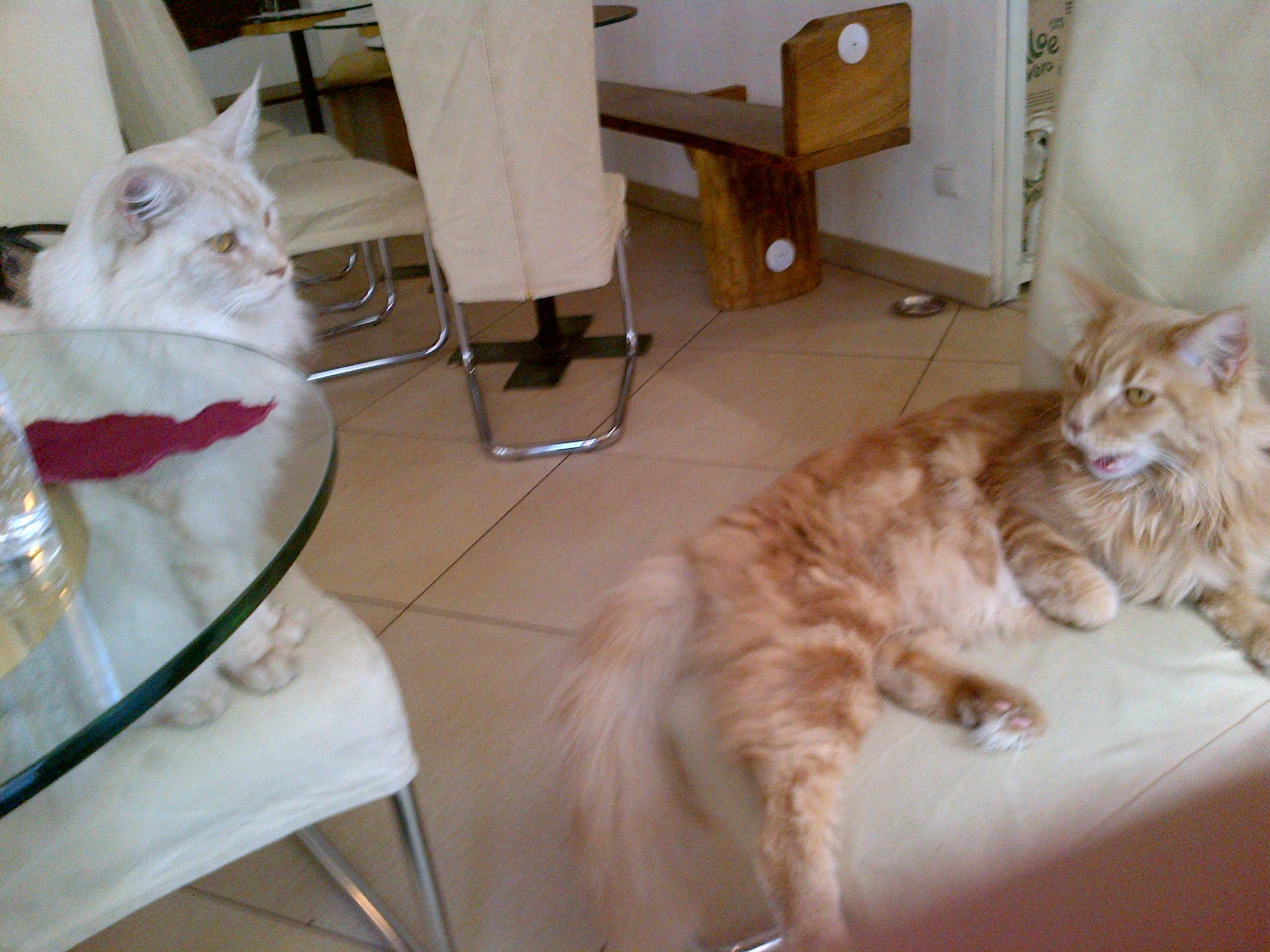 <b>Cat Café...</b>