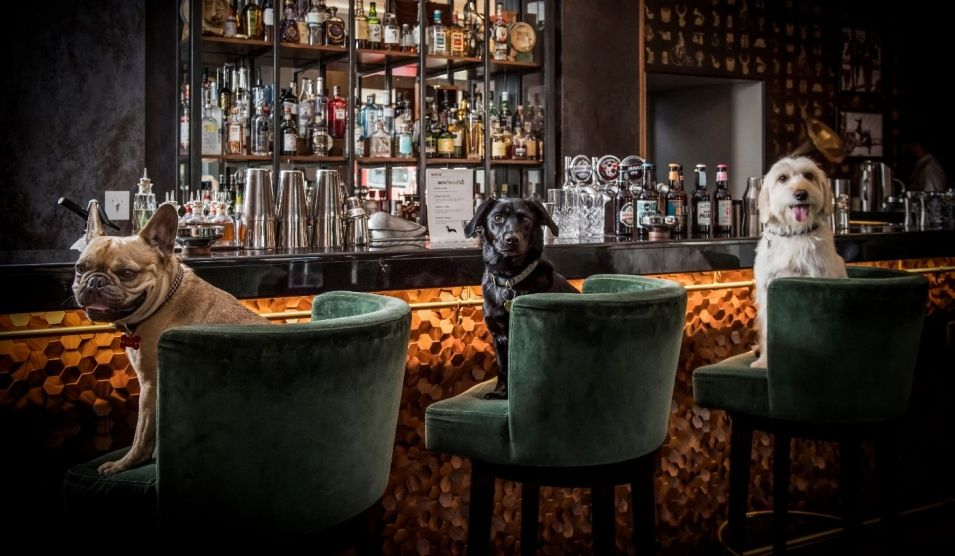 <b>COCKTAILS AND DOGTAI...</b>