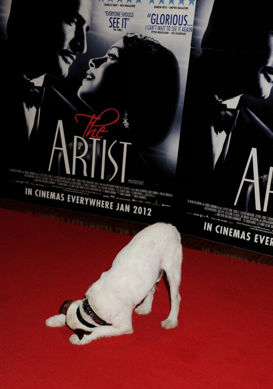 Uggie The Dog takes a bow at The Artist Premiere