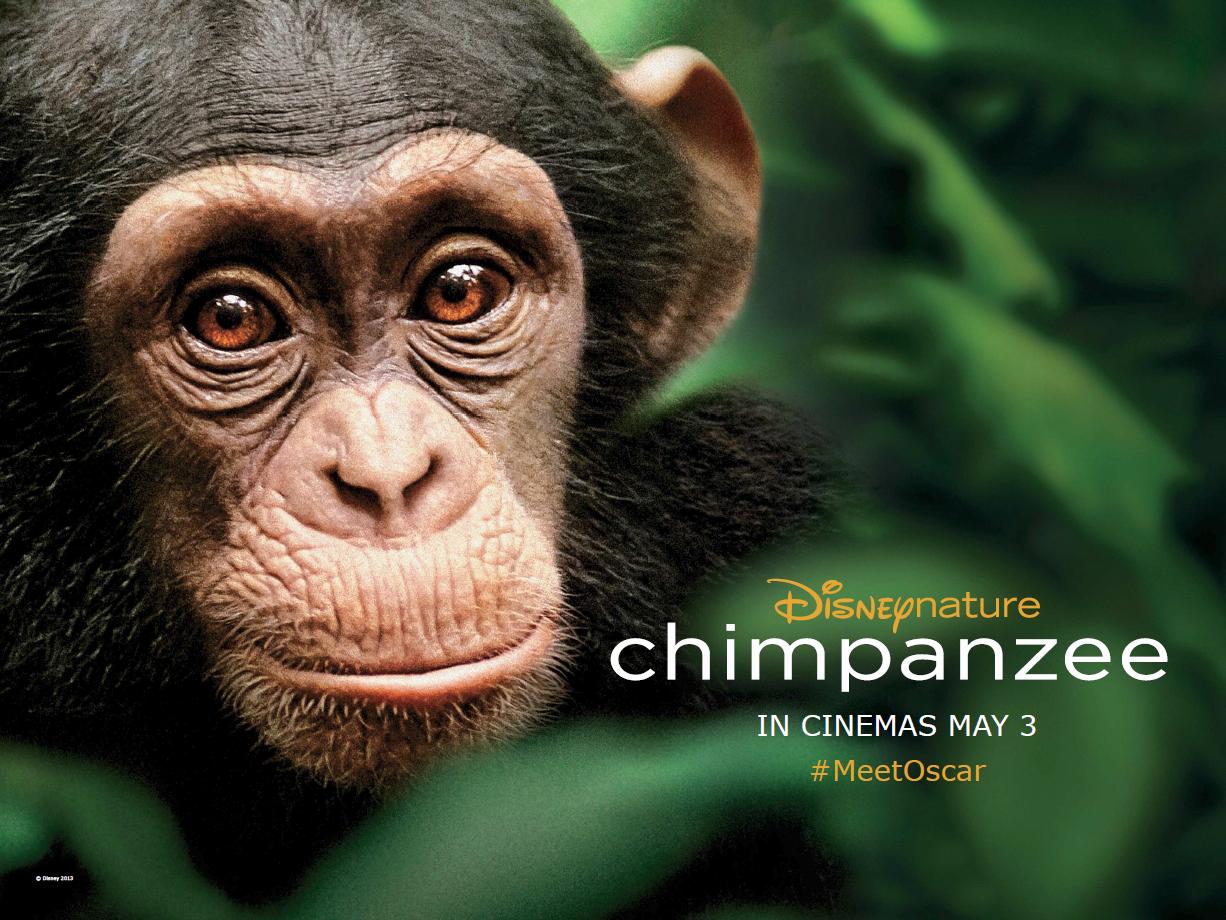 Chimpanzee_Quad